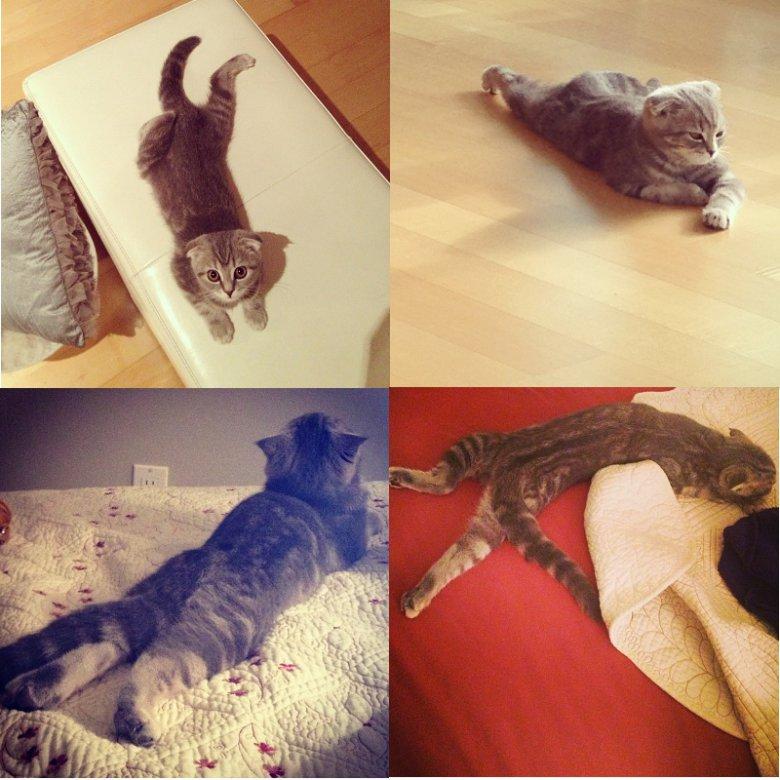 Котейка не знает, как правильно лежать