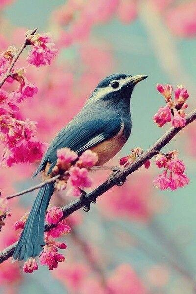 Как видят мир маленькие птицы?