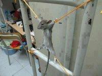 Как не надо поступать: палестинец привязал мышь к батарее и замучил ее до смерти