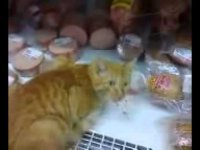Наглый рыжий кот