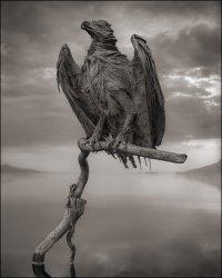Мертвые животные озера Натрон
