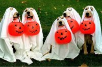 Костюм привидения для собаки на Хэллоуин