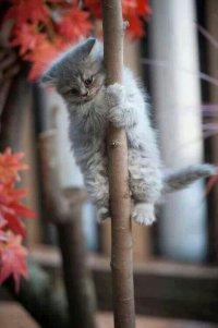 Почему кошки мяукают, взобравшись на дерево?