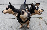 Костюм для собаки на Хэллоуин: Цербер