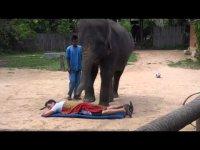 Тайский массаж слонами
