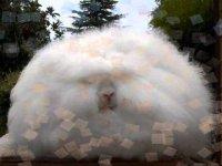 Ангорские кролики существуют