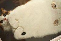 Плоский кот, или Вид снизу
