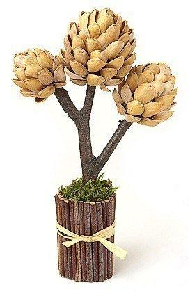 Фисташковое дерево своими руками