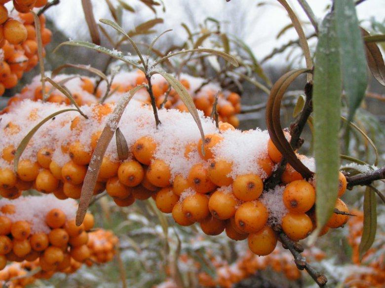 Как приготовить огород к зиме?