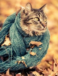 Одежда для кошек: роскошь или необходимость?
