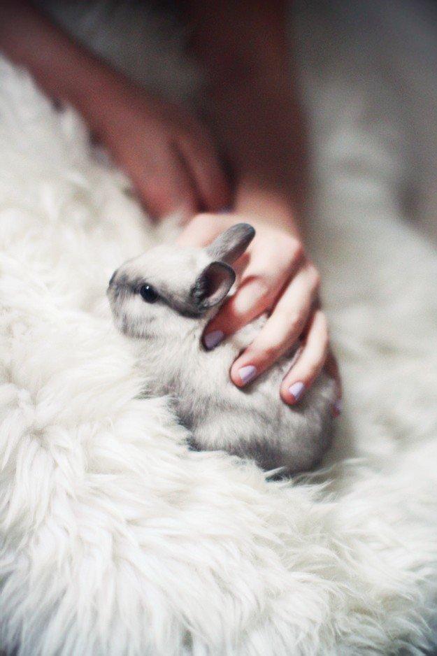 Малыш карликовый кролик