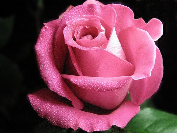 Роза в составе косметики