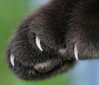 Как стричь кошке когти