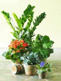 Как избавиться от мошек на цветах
