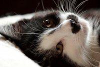 О чем расскажет взгляд вашей кошки