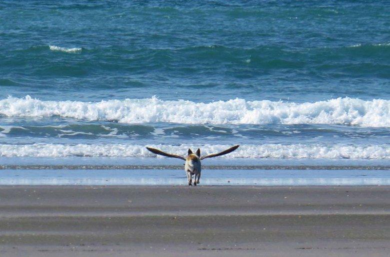 Крылатая собака