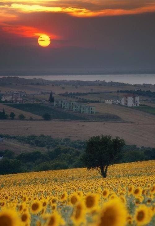 Чем вас может удивить поездка в Италию