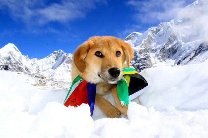 Рупи - собака-альпинист