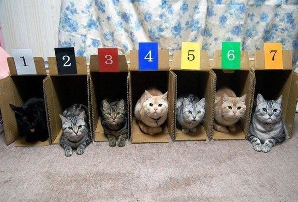 Вот почему не существует кошачьих бегов