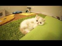 Котенок не хочет мяукать, он лает