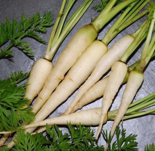 Белая лунная морковь