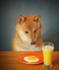 9 полезных продуктов для вашей собаки
