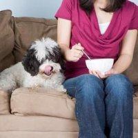 Токсичная еда для собак