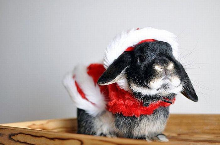 Кролик готовится к Новому году