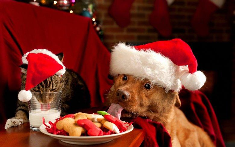 Что подарить на Новый год домашним любимцам?