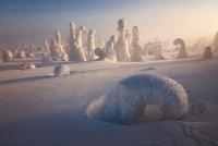 Заснеженные деревья в Лапландии