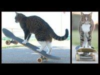 Котэ любитель скейтборда