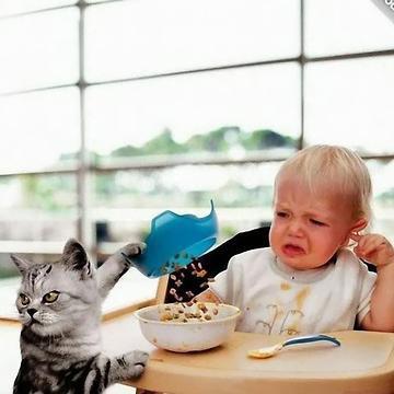Что о людях думают кошки?