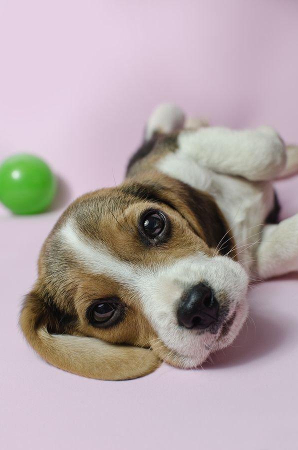 Щенячье счастье: какие игрушки купить для щенка
