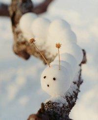 Гусеницы из снега