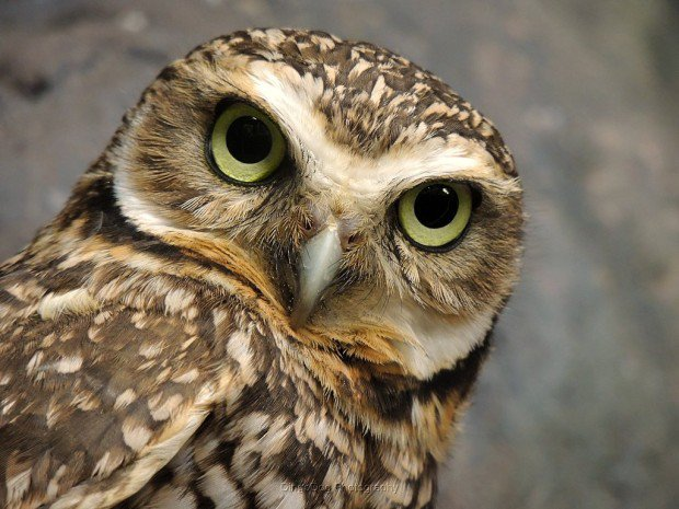 Странные исследования ученых: птицы не пукают