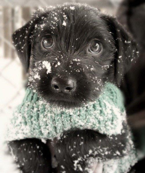 Как гулять с собакой зимой