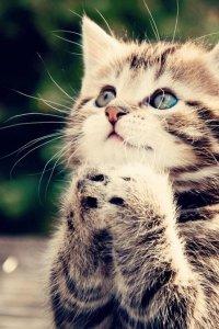 3 факта о кошках, которых вы могли не знать
