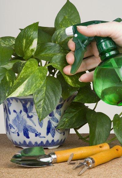 Основы влажного ухода за растениями