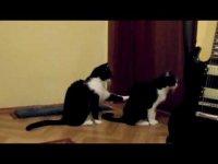 Кошачьи нежности: киска просит прощения