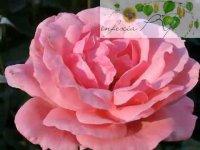 Цветотерапия для ребенка: розовый