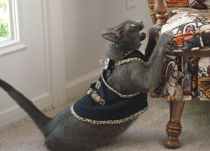 Как спасти мебель от кошки