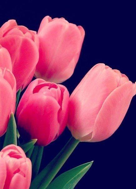 Язык цветов: тюльпан