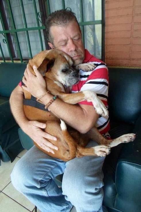 Что делать, если пропала собака