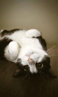 Мифы о кошках