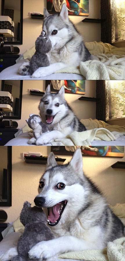 Есть собака в доме? Есть радость!