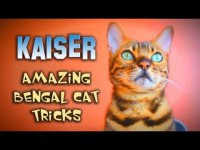 Удивительный кот Кайзер
