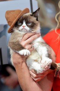 Grumpy Cat сидел в первом ряду на церемонии MTV Movie Awards 2014