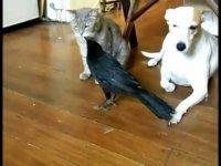 Ворона кормит кошку и собаку