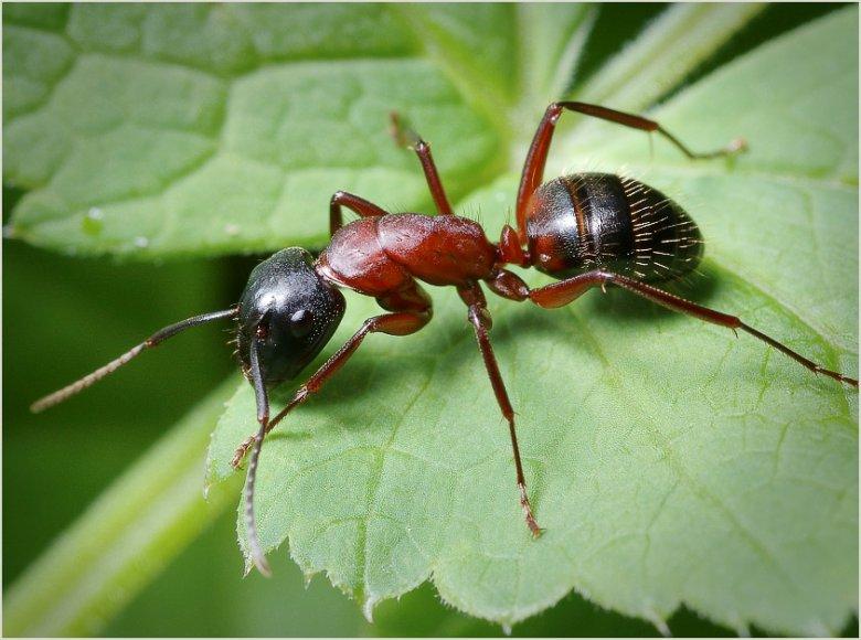 Днем, картинки муравьи