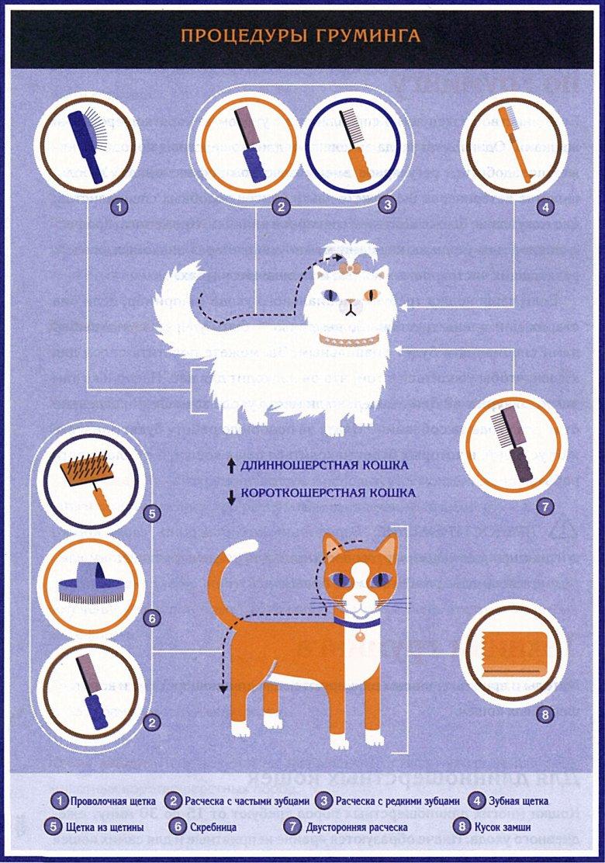 Кошачий груминг: основные инструменты